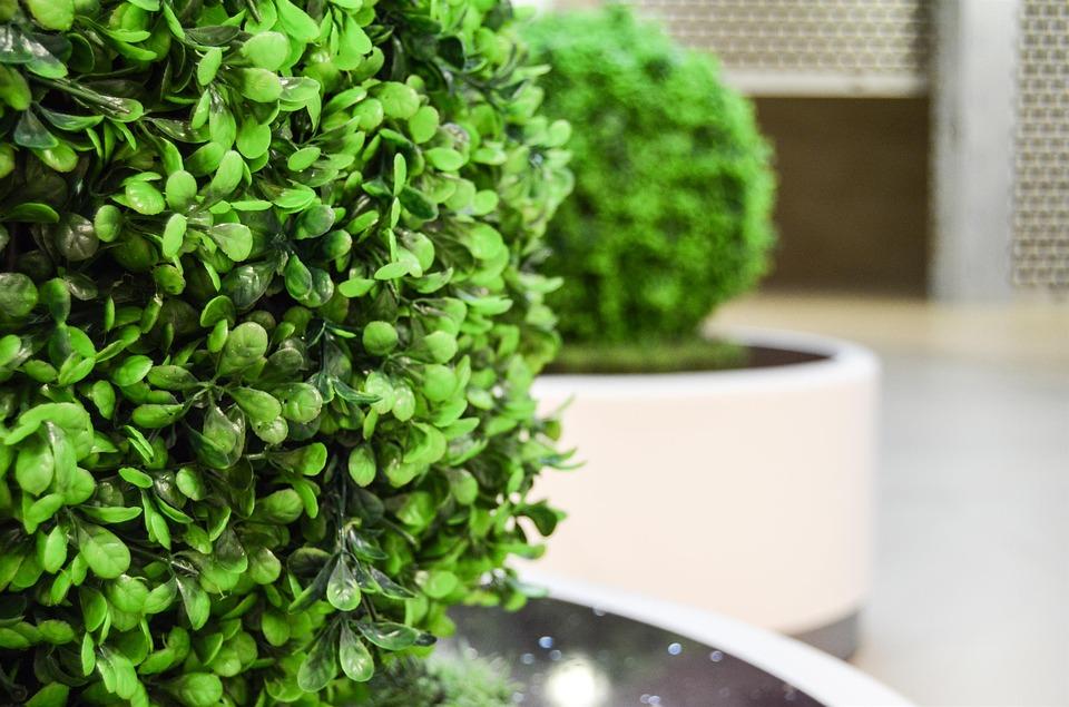 Les plantes artificielles